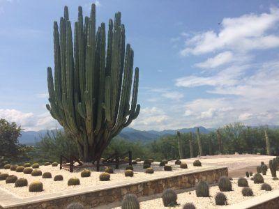 JArdin de cactáseas en los Jardines de México