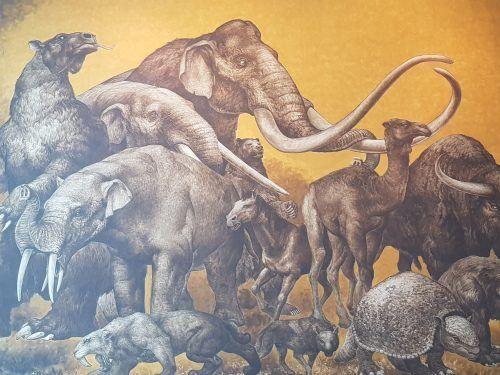 Pintura Museo Antropología