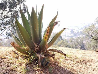 Cerro de los Magueyes