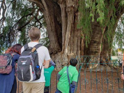 figuras en el árbol del tule