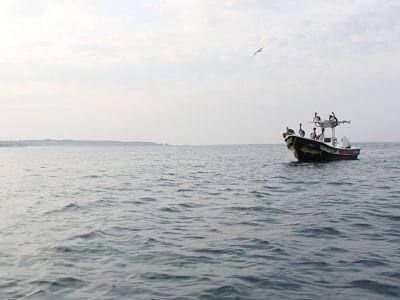 Tour de Delfines y Ballenas